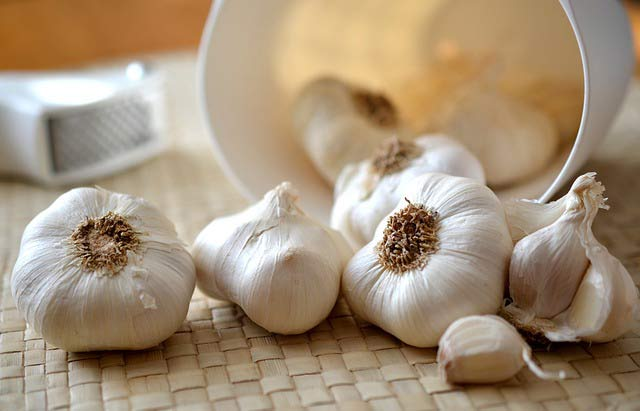 garlic-alergies