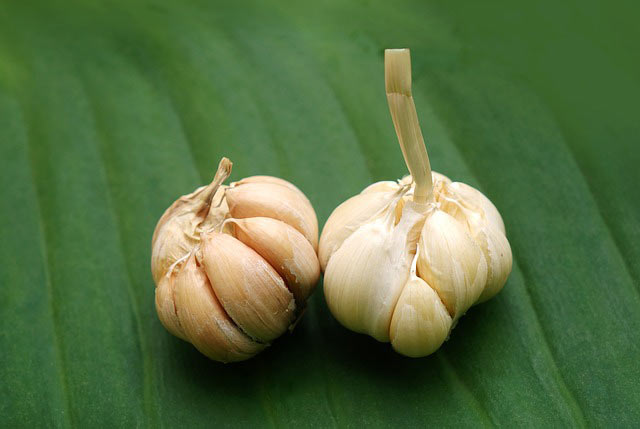 Nature of Garlic Allergies